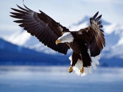 eagle-640x480